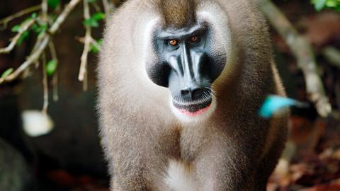 Afrikas geheimnisvolle Welten: Unter Afrikas Affen – Das Abenteuer