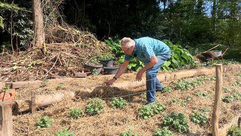 Mulchen soll den Feuchtigkeitsverlust des Bodens verringern.