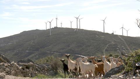 """Häufig, ohne Rücksicht auf die Natur, werden Baugenehmigungen erteilt, sogar in """"Natura 2000 Schutzgebieten""""."""