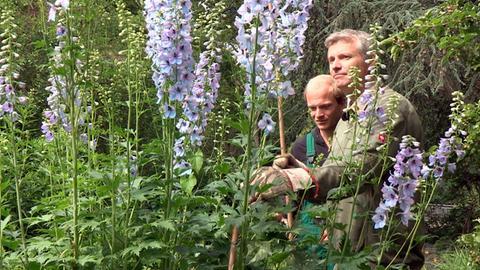 Mannshoher Rittersporn. Die Gärtner*innen von Hamburgs Park Planten un Blomen sind Spezialisten in Sachen Pflanzen und Blumen.