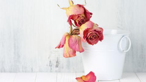 Verwelkte Blumen in einem Topf.