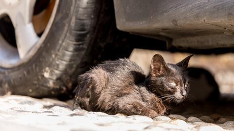 Eine streunernde Katze unter einem Auto.