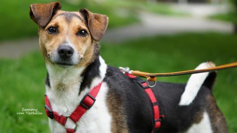 Tiervermittlung mit Herz, Hund Sammy