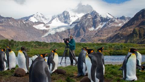 Die Rettung der Pinguin-Insel