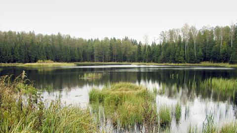Waldsee in der Rominter Heide zwischen den Orten Goldap und Dubininki.