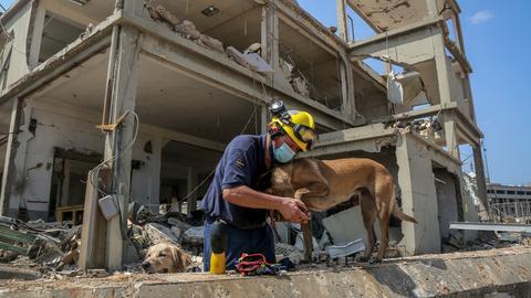 Ein Mitarbeiter des Technischen Hilfswerks (THW) untersucht das Bein eines Rettungshundes während der Arbeit am Ort der schweren Explosion im Hafen Beiruts. Viele Länder haben zur Unterstützung der anhaltenden Suche nach Opfern und Überlebenden Rettungsteams nach Beirut geschickt. Aus Deutschland trafen rund 50 Personen und einige Hunde des Technischen Hilfswerks (THW) ein.