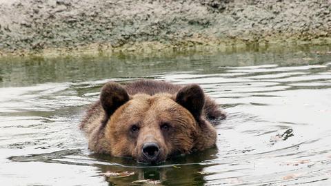 Nach ihrer Rettung geht Manya in der Bärenauffangstation in Domazhyr baden – zum ersten Mal in ihrem Leben.