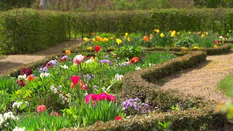 Blumen im Barock-Garten Schloss Gottorf.