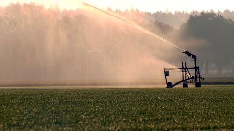 Bleibt im Hochsommer der Regen aus, muss Rasen bewässert werden. Der beste Zeitpunkt dafür: am Abend oder Morgen. So verdunstet weniger Wasser.