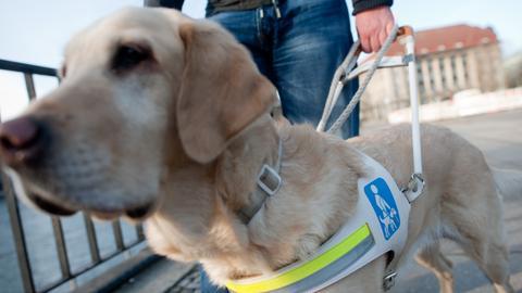Ein blinder Mann hält seinen Blindenführhund am Griff des weißen Führgeschirrs, das der Hund umgeschnallt hat.