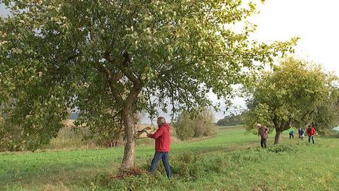 Umweltlotterie Obstbäume