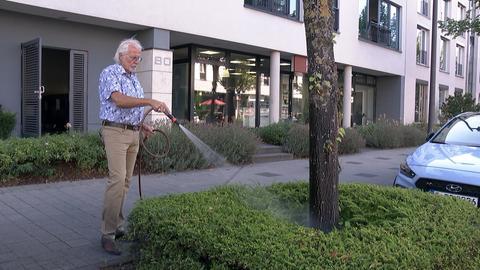 Baumpatenschaft Frankfurt