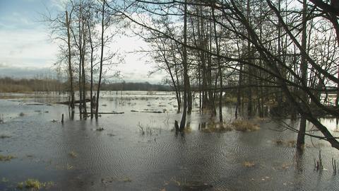 Hochwasser Kinzig