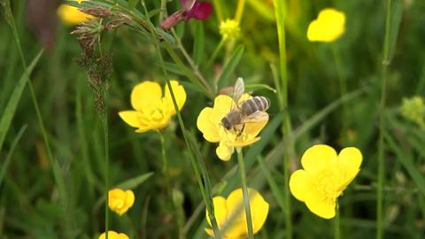 Alle wetter Wildbienen
