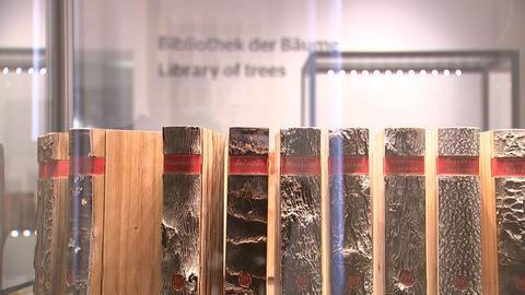 Bibliothek der Bäume