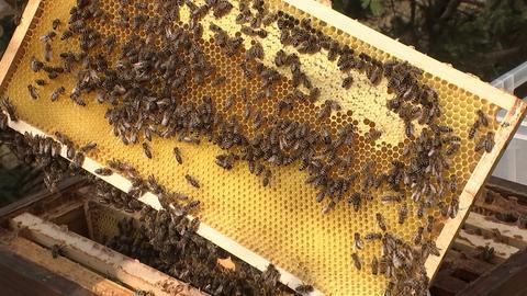 Bienenprojekt Hoher Meißner