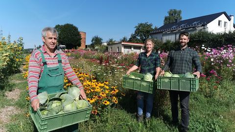 Gemüseanbau Mulch