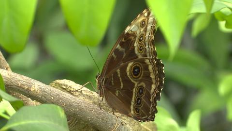 Schmetterling Marburg