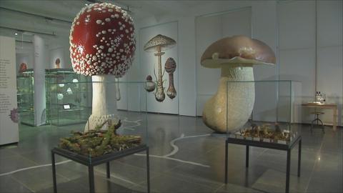 Ausstellung: Pilze