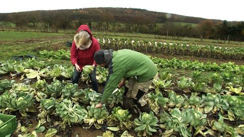 Bunter Acker solidarische Landwirdschaft NiddaWallernhausen
