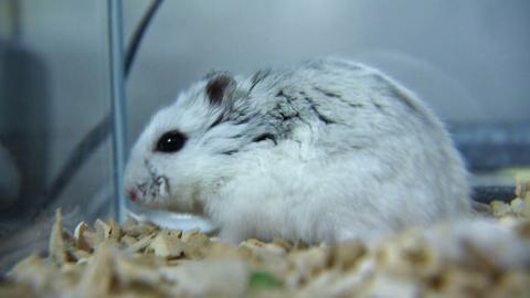 Hamster Uni Marburg