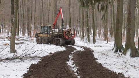 Holzernte bei Friedrichsdorf im Taunus auf (fast) gefrorenem Boden