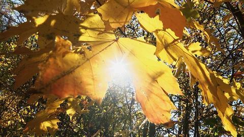 Herbst buntes Laub am Edersee