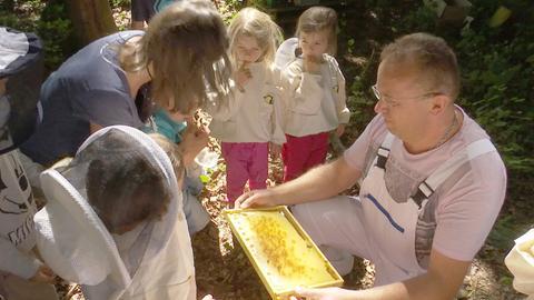 Waldkindergarten Bienenprojekt