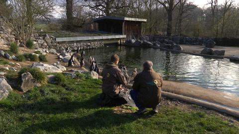 Pinguine und Pfleger alleine im Tierpark Sababurg