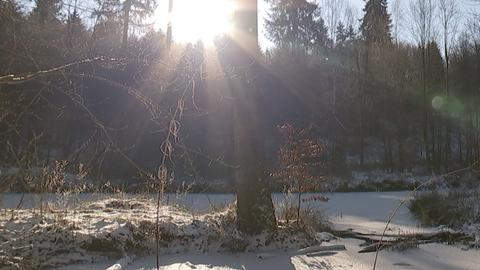 Ökologische Teichsanierung Gabelteiche Ober-Ramstadt