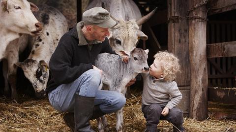 Vater und Sohn im Kuhstall. Beide streicheln ein Kälbchen.