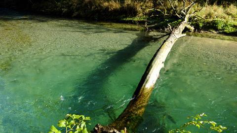 Ein Baumstamm liegt über einem Fluss
