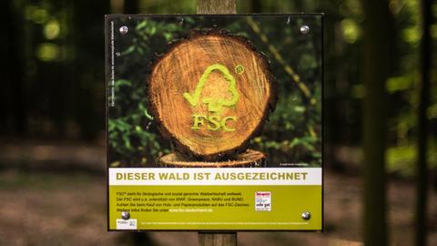 Foto eines FSC-Schilds in einem Wald.
