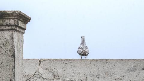 Ein Vogel auf einer Beton Mauer.