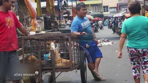 Krank durch Tiere