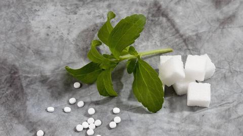 Ein Stück der Stevia-Pflanze mit den daraus gewonnen Tabletten und Würfelzucker.