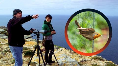 Links: Zwei Protagonisten schauen durch ein Fernrohr, auf der rechten Seite sieht man einen kleinen Vogel, der in ein Netz fliegt.