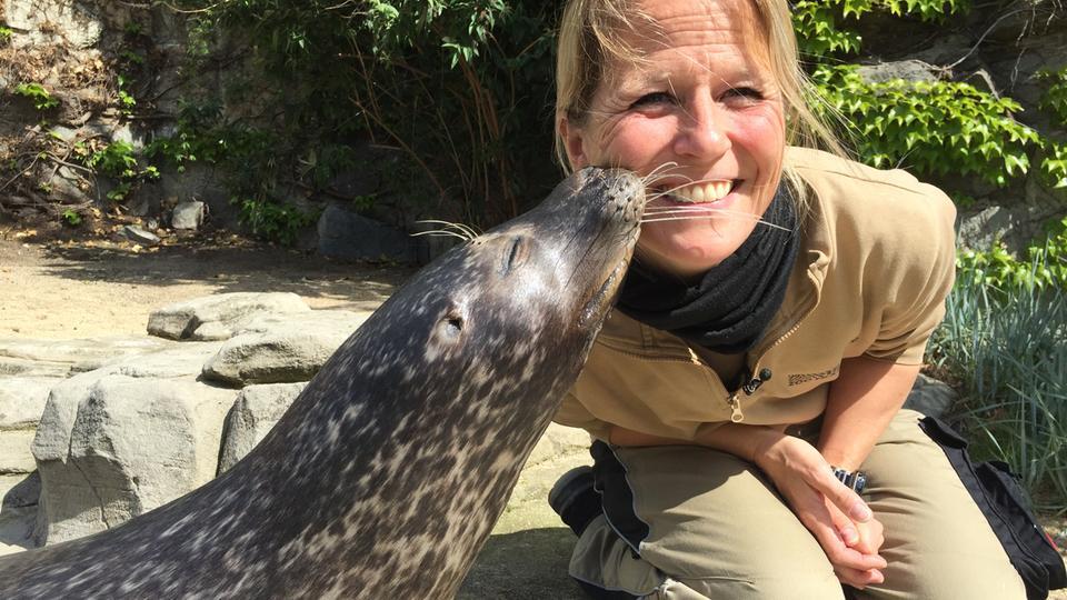 Die Frankfurter Zoo-Tierärztin Dr. Nicole Schauerte bekommt einen Kuss von einem Seehund