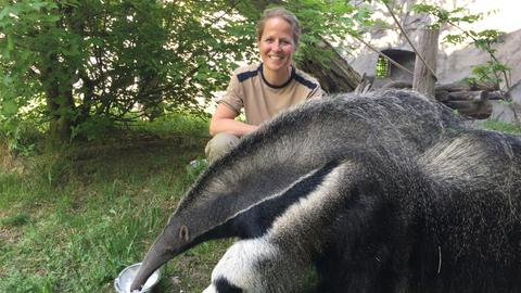 Tierärztin Dr. Nicole Schauerte mit Ameisenbär im Frankfurter Zoo