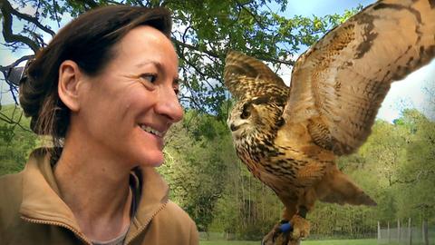 Uhu Wilma aus dem nordhessischen Tierpark Sababurg hat eine schiefe Kralle.