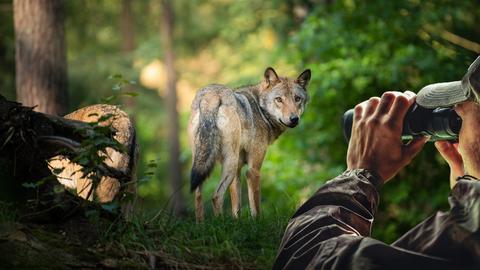 Der Wolf ist zurück - und nun?