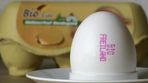 """Ein Bio-Ei in einem Eierbecher, dahinter steht eine Eierpackung mit der Aufschrift """"Bio-Eier""""."""