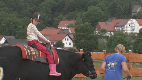 Ein Mädchen reitet auf einer Kuh.