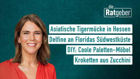 Themen sind u.a.: Asiatische Tigermücke in Hessen, Delfine an Floridas Südwestküste, DIY: Coole Paletten-Möbel, Kroketten aus Zucchini.