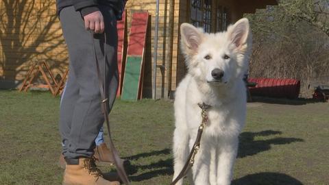 Ein junger, weißer Hund steht angeleihnt neben einer Person und schaut traurig in die Kamera. Armer Hundi!