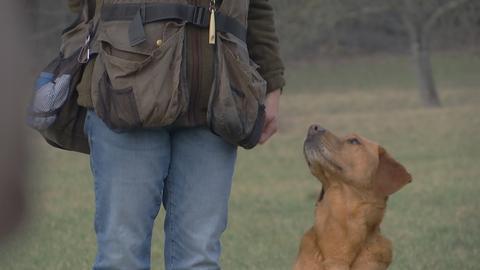 Ein Hund schaut hinauf zu einer Person.