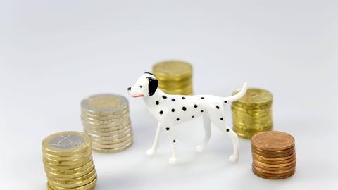 Hundefigur zwischen Stapeln von Münzgeld