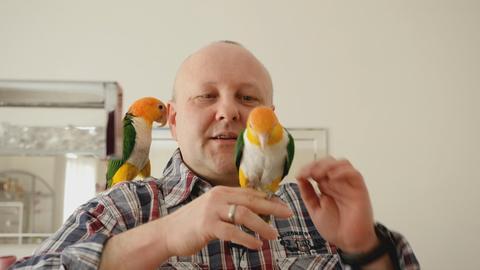 Ein Protagonist hat einen Papagei auf seiner Schulter und einen zweiten Papagei auf seiner Hand sitzen.