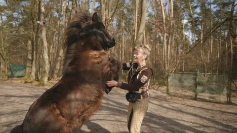 Ein dunkles Pony steht vor einer Frau auf seinen beiden Hinterbeinen.