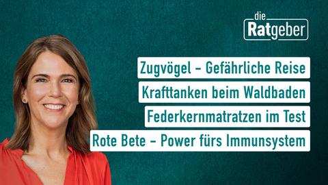 ratgeber2110